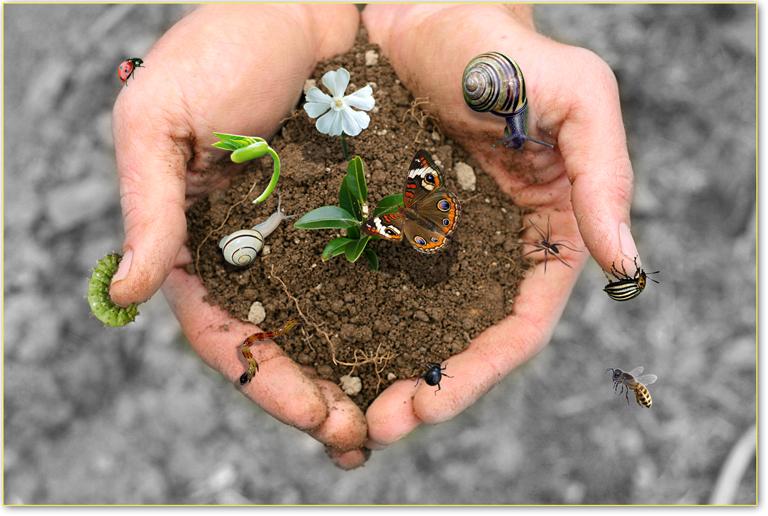 biodivers suolo