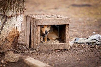 Cane in catena